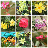 Tropische installaties en bloemen Royalty-vrije Stock Afbeelding