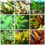 Tropische installaties en bloemen Stock Foto