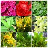 Tropische installaties en bloemen Royalty-vrije Stock Foto's