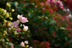 Tropische installaties en bloemenachtergrond Stock Foto