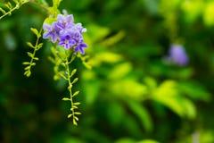 Tropische installaties en bloemenachtergrond Stock Afbeeldingen