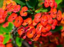 Tropische installaties en bloemenachtergrond Stock Afbeelding