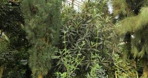Tropische installaties en boom in de botanische tuin Botanische serre Binnenland van serre Tropische achtergrond stock videobeelden