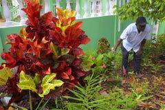 Tropische installaties in Grenada stock afbeelding