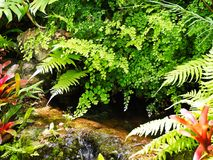 Tropische installaties overhangende kleine stroom stock afbeelding