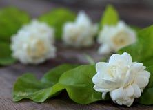 Tropische jasmijnbloem op hout Jasmijnbloemen en bladeren op br royalty-vrije stock afbeelding