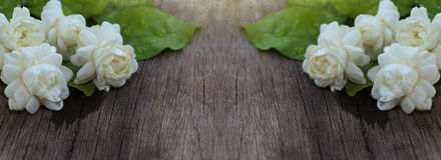 Tropische Jasminblume auf Holz Jasminblumen und -blätter auf Br Stockfotografie