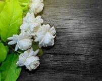 Tropische Jasminblume auf Holz Jasminblumen und -blätter auf Br lizenzfreie stockfotografie
