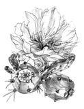 Tropische Kaktusblume in der Blüte einfarbige Schwarzweiss-Illustration des Aquarells Lizenzfreie Stockbilder
