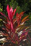 Tropische Kleur royalty-vrije stock afbeeldingen