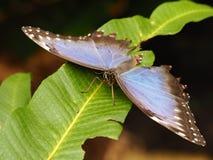 Tropische kleurrijke vlinder Stock Foto