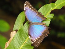 Tropische kleurrijke vlinder Royalty-vrije Stock Afbeelding