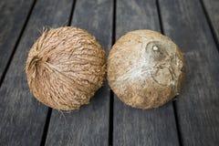 Tropische Kokosnuss Stockfoto