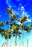 Tropische Kokosnuss-Bäume im Paradies Stockfoto