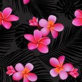 Tropische korallenrote Blumen und Blätter auf schwarzem Hintergrund nahtlos Vektor Stockfotografie