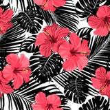 Tropische korallenrote Blumen und Blätter auf Schwarzweiss-Hintergrund Lizenzfreie Stockfotografie