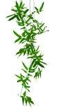 Tropische Kriechpflanzen Lizenzfreies Stockfoto