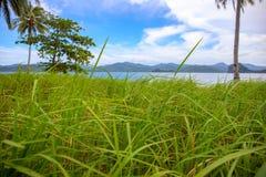 Tropische kust met blauw zeewater en groen gras Verlaten eiland idyllische kust Palm Beachmening royalty-vrije stock foto