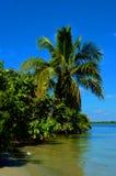 Tropische kustlijn met palmen stock afbeelding