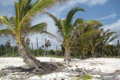 Tropische Landschaft Lizenzfreie Stockbilder