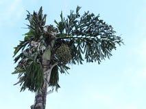 Tropische Landschaft lizenzfreie stockfotos