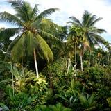 Tropische Landschaft stockbild