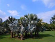 Tropische Landschaft Lizenzfreie Stockfotografie