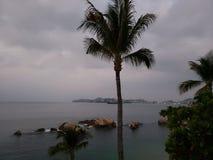 tropische Landschaft mit dem Schattenbild einer Palme an einem bewölkten Tag lizenzfreie stockbilder