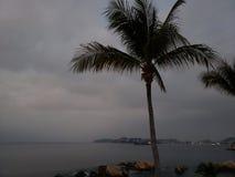 tropische Landschaft mit dem Schattenbild einer Palme an einem bewölkten Tag stockfoto