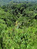 Tropische Landschaft mit Fluss und Bergen Lizenzfreie Stockfotos