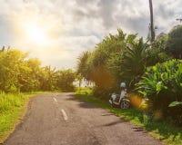 Tropische Landschaft mit leerer Straße und grünem Straßenrand Tropische Waldreise durch Fahrrad Stockfoto