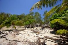 Tropische Landschaft mit Palmen Stockfotos