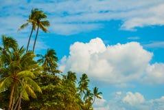 Tropische Landschaft mit Palmen gegen das blaue Meer Insel, Bohol philippinen Stockfotos