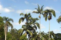 Tropische Landschaft mit Palmen und blauem Himmel Lizenzfreie Stockbilder