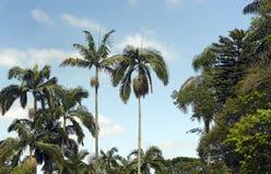 Tropische Landschaft mit Palmen und blauem Himmel Stockfotografie