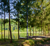 Tropische Landschaft, See und Hügel in Kathu-Bezirk auf Phuket Stockbilder