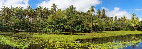Tropische lelievijver Royalty-vrije Stock Foto's