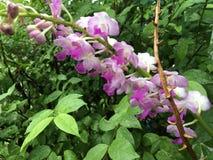 Tropische lichtpaarse orchidee stock fotografie