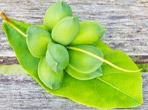 Tropische Mandelfrüchte Stockfotografie