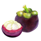 Tropische Mangostanfruchtfrucht auf weißem Hintergrund Lizenzfreies Stockfoto