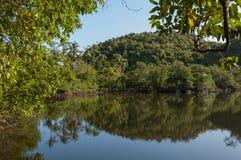 Tropische mangrovelagune op Danjugan-Eiland, Filippijnen Royalty-vrije Stock Foto's
