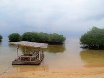 Tropische Mangroven Stockfotografie