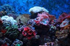 Tropische Meerespflanze und Korallen Lizenzfreies Stockfoto