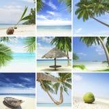Tropische mengeling Royalty-vrije Stock Afbeeldingen
