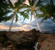 Tropische Mening royalty-vrije stock afbeeldingen