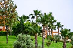 Tropische Mening over groene tuin Royalty-vrije Stock Afbeeldingen