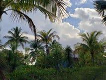 Tropische Middag royalty-vrije stock afbeelding