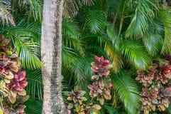 Tropische Mischung Stockfotografie