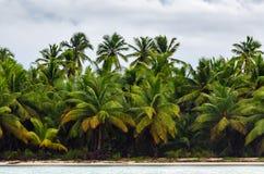 Tropische moesson stormachtige hemel met palmen stock afbeeldingen