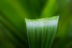 Tropische Natur des frischen Grünpflanzeblattes nach dem Regen, Weichzeichnung lizenzfreie stockbilder